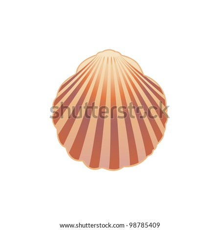 Seashell.  Vector illustration eps.10. - stock vector