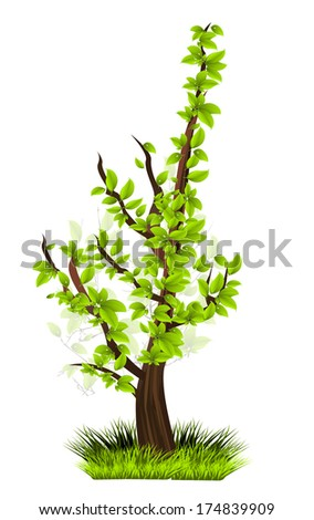 Season tree with green leaves
