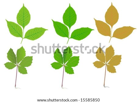 Seasonal leaves - stock vector