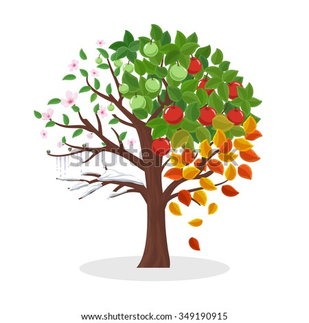 Seasons tree. Spring summer autumn and winter, leaf plant, snow and flower, vector illustration