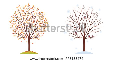 Seasons. Trees in autumn and winter. Fall of the leaves. Isolated on white background. Vector illustration. - stock vector