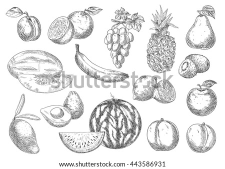 Selected fresh fruits sketches with apple and oranges, lemons, banana and peaches, mango, pineapple and grapes, pear, plum and melon, avocado, watermelon and kiwis