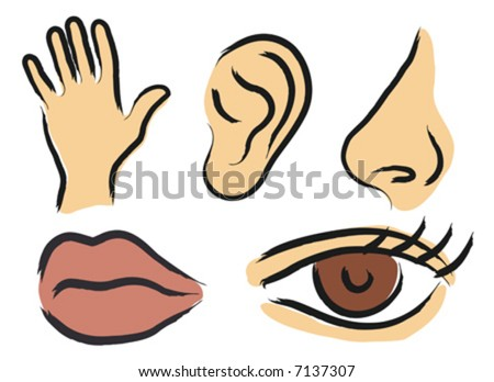 Sensory perception - stock vector