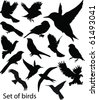 Set Birds.Vector - stock vector