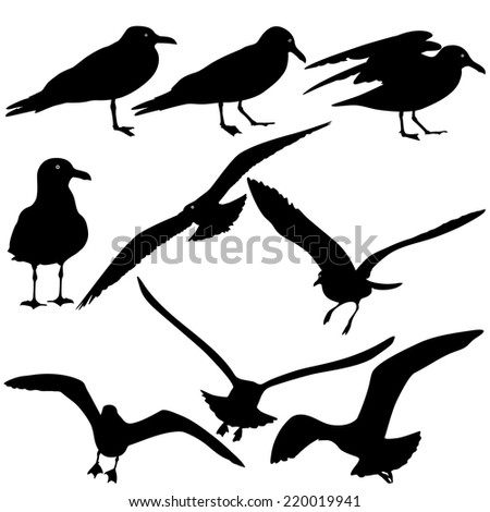Set black silhouettes of seagulls on white background. Vector illustrations. - stock vector