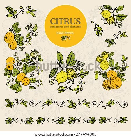 set citrus ornament and elements lemon hand draw on color backgrounds - stock vector