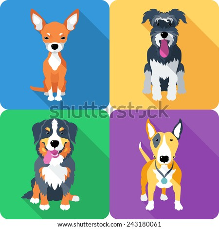 Set dog icon flat design, Bull Terrier and Chihuahua, Miniature Schnauzer and Bernese Mountain Dog - stock vector
