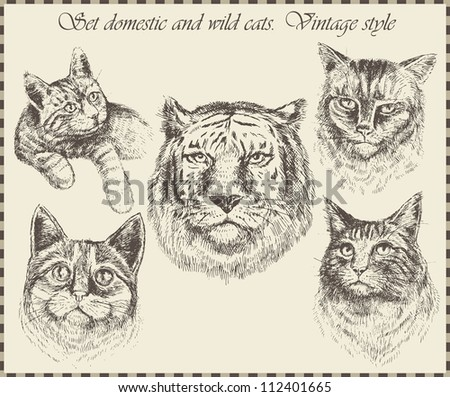 Set domestic and wild cats. Vintage style - stock vector