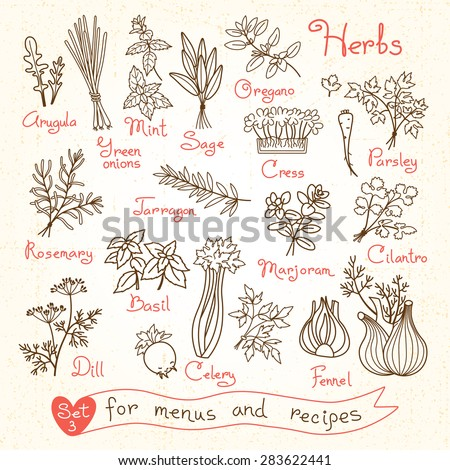 Set drawings of herbs for design menus, recipes and packages product. Vector Illustration. - stock vector