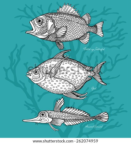 Set Fish Blotch-eye Soldierfish, Opah, Armored Gurnard Black & White - stock vector