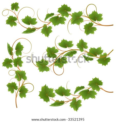 Set from vine on a white background - stock vector