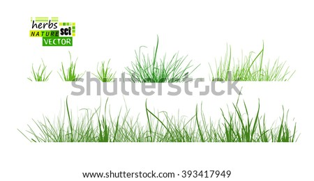 Set grass. Vector - stock vector