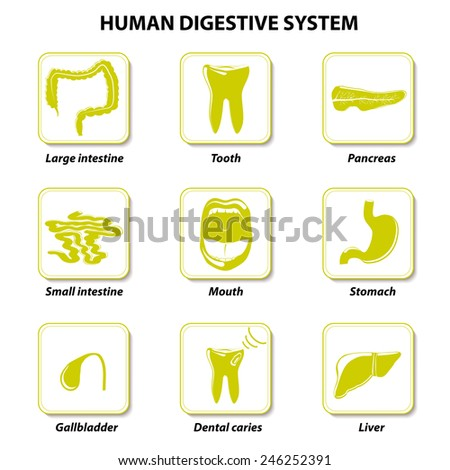 Set icons. Human anatomy. Gastrointestinal tract or Digestive System. Vector illustration - stock vector