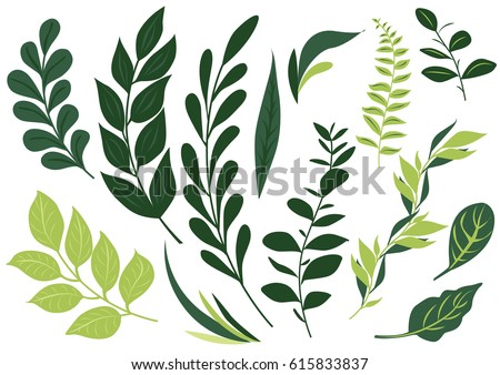 set leaf vector collection leaves stock vector 615833837 shutterstock rh shutterstock com leaves vector pattern leaves vector png