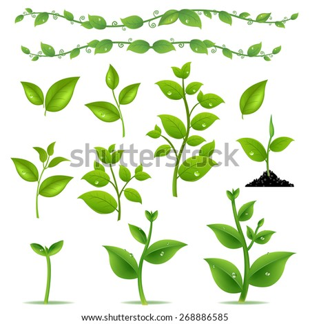Set Leaves And Plants With Gradient Mesh, Vector Illustration - stock vector