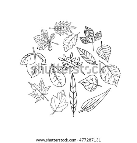 Set leaves on a white background. Autumn leaves set. Colorful autumn leaves set. Leaves branch. leaves tree. leaves free fall.Leaves icon. Leaves logo. Leaves nature. Leaves autumn.Leaves illustration