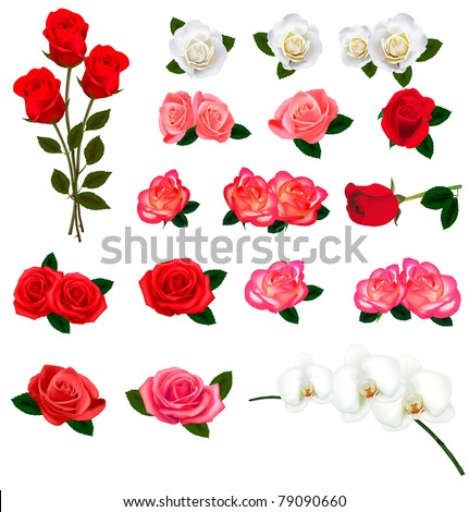 Set of a beautiful flowers on a white background. Vector. - stock vector
