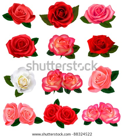 Set of a beautiful roses on a white background. Vector. - stock vector