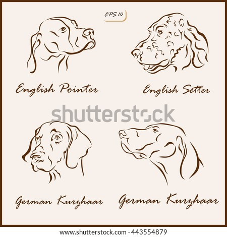 Set of a vector Illustration shows a dog breeds. English Pointer, English Setter, German Kurzhaar