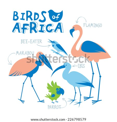 Set of african birds drawn in flat style - stock vector