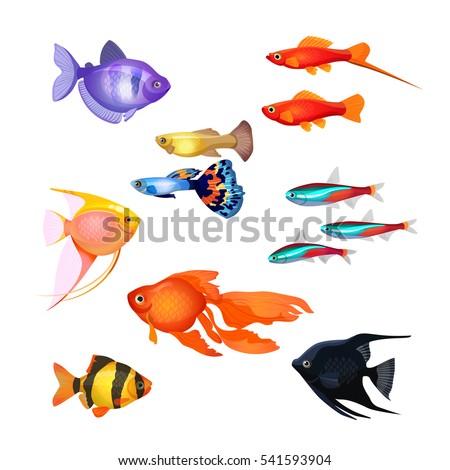 Set aquarium fish goldfish poecilia reticulata stock for Salt water fish pets