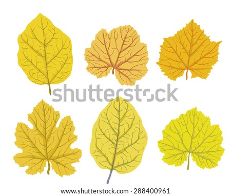 Set of autumn leaves of trees, isolated on white, vector illustration - stock vector