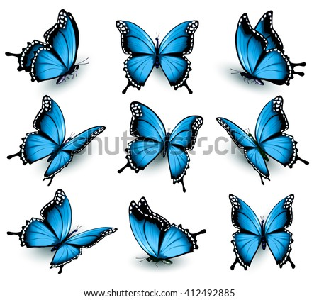 Set of beautiful blue butterflies. Vector. - stock vector