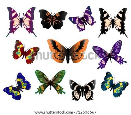 Set Beautiful Butterflies Different Types Different Stock ...