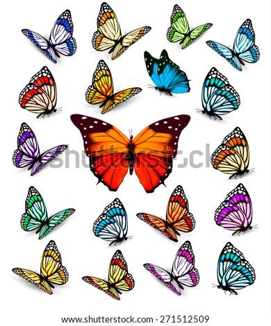 Set of beautiful colorful butterflies. Vector. - stock vector