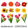 Set of beautiful flowers. Vector illustration - stock vector