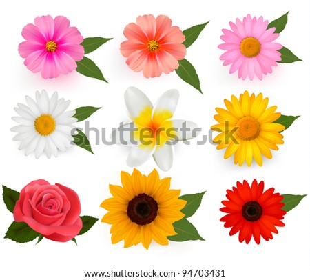 Set of beautiful flowers. Vector illustration. - stock vector