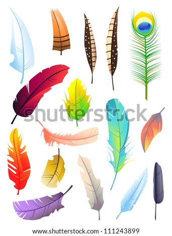 Set of bird colored  feathers isolated on white background. Beautiful elements for decoration - stock vector