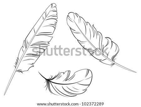 Set of bird feathers isolated on white background, such logo. Jpeg version also available in gallery - stock vector