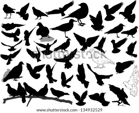Set of 38 birds and silhouettes of birds - stock vector