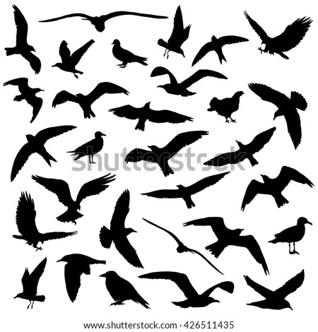 Set of birds silhouettes 30 in 1 on white background. Vector illustration - stock vector