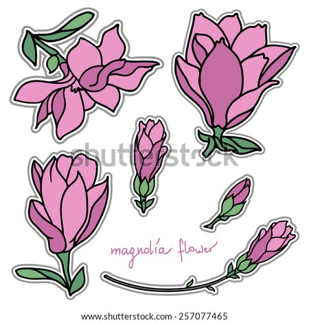 Set of bright magnolia flower stickers - stock vector