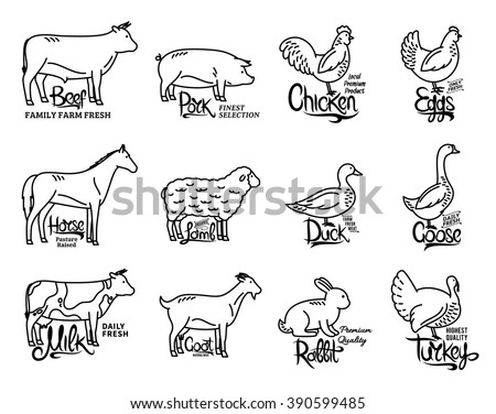 Turkey Hen Stock Images, Royalty-Free Images & Vectors | Shutterstock