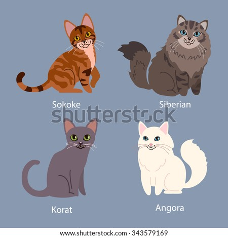 Set of cartoon cats with different colored fur standing, sitting or walking vector illustrations. Different breeds of cats: angora, korat, siberian, sokoke. - stock vector