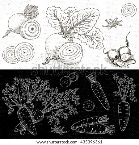 Set of chalk hand drawn, in sketch style, food and spices, black and white chalkboard background. Vegetable set beet leaves, beets sliced, carrots leaves, carrots. Hand drawn vector illustration. - stock vector