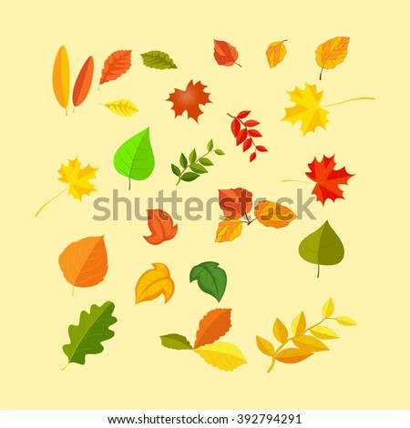 Set of colorful autumn leaves - stock vector