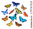 Set of colorful butterflies isolated on white background. - stock photo