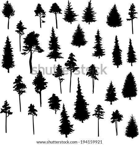 set of conifer trees, nature design element, vector illustration - stock vector