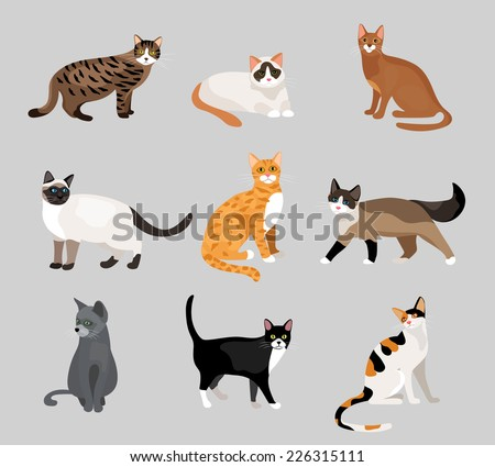 Set of cute cartoon kitties or cats with different colored fur and markings standing  sitting or walking  vector illustrations on grey - stock vector