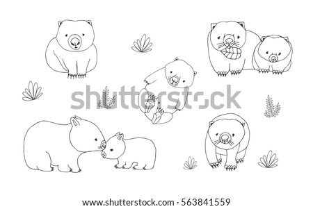 set of cute young wombat in various poses adult animal with cub hand drawn