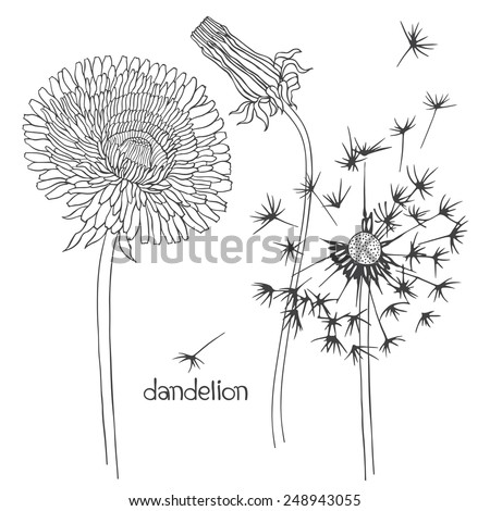 Set of dandelion isolated on white background. Hand drawn vector illustration, sketch. Elements for design.