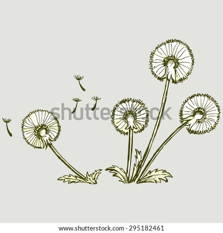 Set of dandelions. Vector Image - stock vector