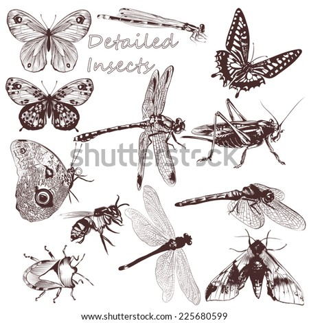 Set of detailed vector butterflies for design - stock vector