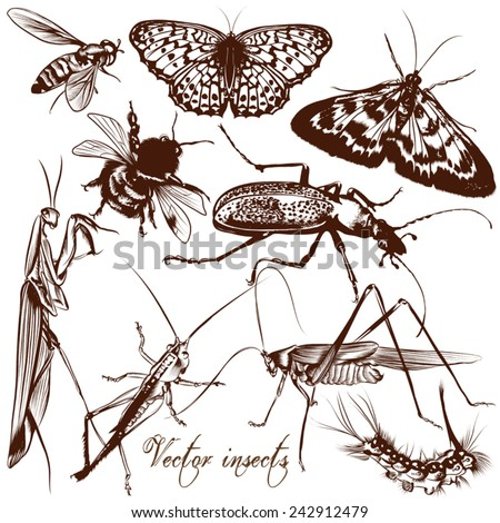 Set of detailed vector insects for design - stock vector
