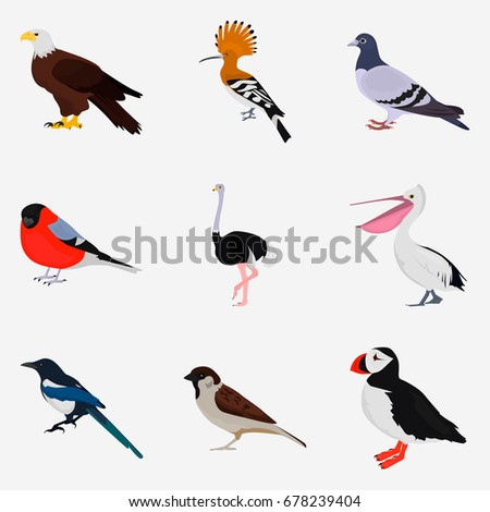 Set Different Birds Color Flat Icon Stock Vector 678239404 ...
