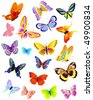 set of different butterflies - stock vector